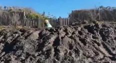 Grillo nella fossa.jpeg